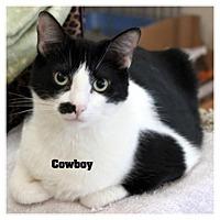 Adopt A Pet :: Cowboy - Monrovia, CA