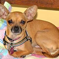 Adopt A Pet :: Pacquito - San Diego, CA