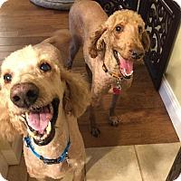 Adopt A Pet :: Magnificent Moseley Williams - Fresno, CA