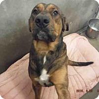 Adopt A Pet :: A569439 - Oroville, CA