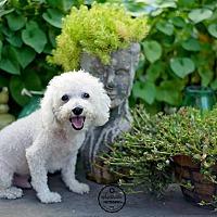 Adopt A Pet :: Truman - Jacksonville, FL