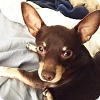 Adopt A Pet :: Spencer - Castro Valley, CA