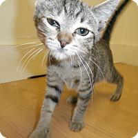 Adopt A Pet :: Poet - Milwaukee, WI