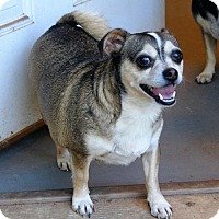 Adopt A Pet :: Badger - Martinez, GA
