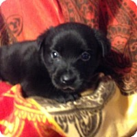 Adopt A Pet :: MOLLYS 7 - 1 - Colton, CA