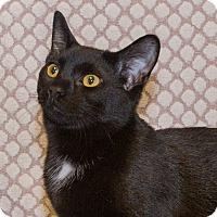 Adopt A Pet :: Blackie - Elmwood Park, NJ