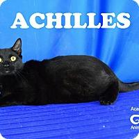 Adopt A Pet :: Achilles - Carencro, LA
