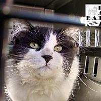 Adopt A Pet :: Bruce Wayne - Albuquerque, NM
