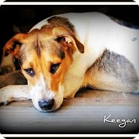 Adopt A Pet :: Keegan - Pascagoula, MS