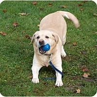 Adopt A Pet :: Nikita - Toronto/Etobicoke/GTA, ON