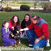 Adopt A Pet :: Athena - Darlington, MD