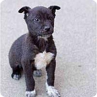 Adopt A Pet :: Gene - Portland, OR