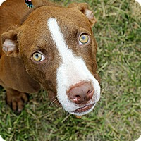 Adopt A Pet :: Jimmy - Reisterstown, MD