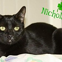 Domestic Shorthair Cat for adoption in Ocean View, New Jersey - Nikolas