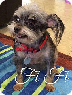 Dog Adoption Scottsdale Arizona