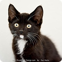 Adopt A Pet :: Posey - Fountain Hills, AZ
