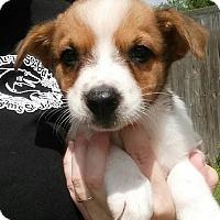 Adopt A Pet :: Mackay - Gainesville, FL
