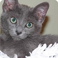Adopt A Pet :: Simon - Santa Rosa, CA