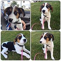 Adopt A Pet :: Aspen - Woodstock, ON