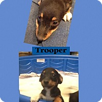Adopt A Pet :: Trooper Adoption pending - Manchester, CT