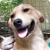 Adopt A Pet :: Socks-Smiling! - Olive Branch, MS