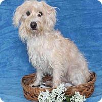 Adopt A Pet :: Hero - Encino, CA