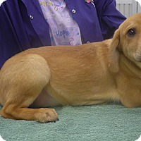 Adopt A Pet :: Chance - Manning, SC