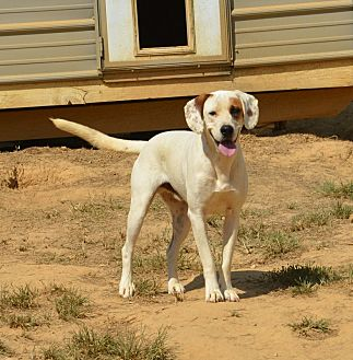 Labrador Retriever Mix Dog for adoption in Grenada, Mississippi - Landon