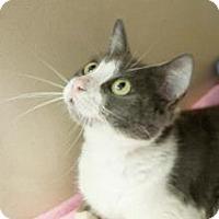 Adopt A Pet :: Virginia - Lincolnton, NC