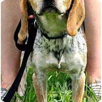 Adopt A Pet :: Deacon - Elizabethton, TN
