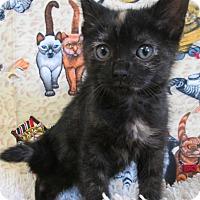 Adopt A Pet :: SAGITTARIUS - New Cumberland, WV