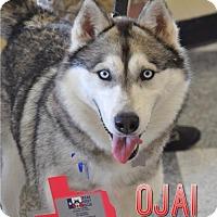 Adopt A Pet :: Ojai - Carrollton, TX