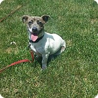 Adopt A Pet :: Cora - New Oxford, PA