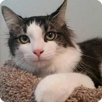 Adopt A Pet :: Tommy - Princeton, MN