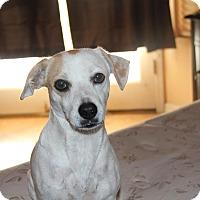 Adopt A Pet :: Alessa - Phoenix, AZ