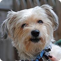 Adopt A Pet :: Frank - Philadelphia, PA