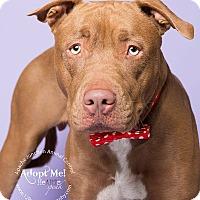 Adopt A Pet :: Flash - Apache Junction, AZ