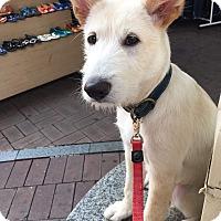 Adopt A Pet :: RYAN - Los Angeles, CA