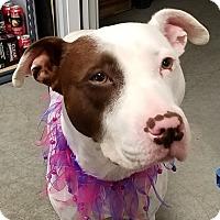 Pit Bull Terrier Mix Dog for adoption in Basehor, Kansas - Kamea