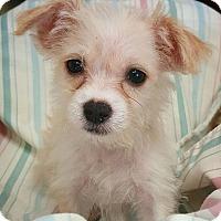 Adopt A Pet :: Ember - Fredericksburg, TX