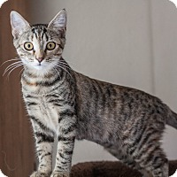 Adopt A Pet :: Kona - Prescott, AZ