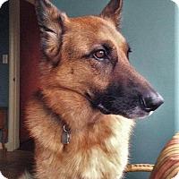 Adopt A Pet :: Daisy - Woodinville, WA