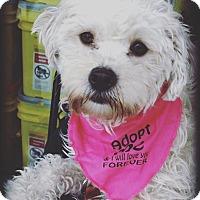 Adopt A Pet :: Stella! - Redondo Beach, CA