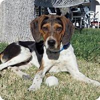 Adopt A Pet :: Beau - Las Vegas, NV