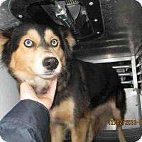 Adopt A Pet :: PRETTY GIRL - Conroe, TX