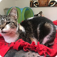 Adopt A Pet :: Holly - Middletown, NY