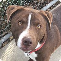 Adopt A Pet :: Marlow - Chula Vista, CA