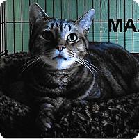 Adopt A Pet :: Max - Medway, MA
