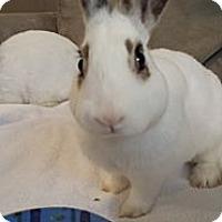 Adopt A Pet :: Linus - Conshohocken, PA