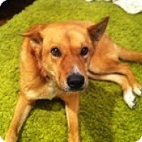 Adopt A Pet :: Maggie - Justin, TX